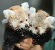 Leon imágenes de animales en hd. Imágenes de Fondo HD de Animales