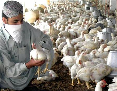 Poultry%2BFarming%2Bin%2BPakistan Where To Buy A Chicken Coop