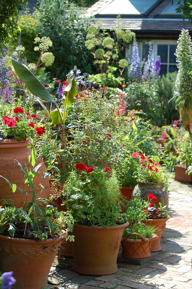 Potting up more plant combinations for pots and some forward planning - Best flower combinations for containers ...
