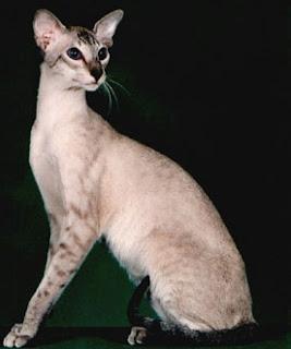 Ultimate Cat: Cat Bree...