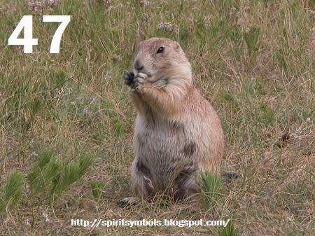 Spirit Symbols Prairie Dog