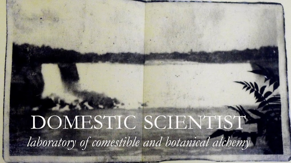 domestic scientist