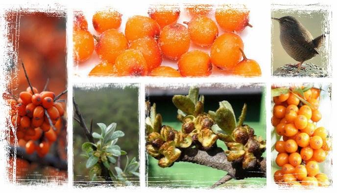 Rakytník rešetliakový má zelené a zeleno-žlté kvietky, podľa toho, či ide o samčiu alebo samičiu rastlinu. V jeho korunách hniezdi vták oriešok obyčajný. Plody rakytníka sú oranžové bobule. Strom dáva veľkú úrodu bobúľ, ktoré obsahujú vzácne látky, majú veľa zdravotných účinkov, ktoré budú popísané v článku.