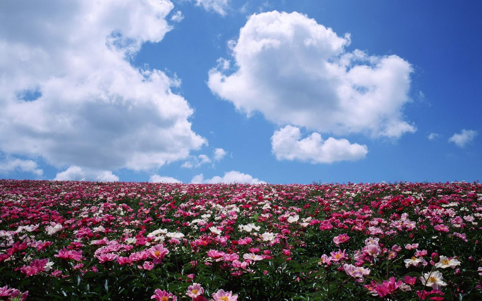 Fotos De Paisajes Llenos De Flores - Yun Gratis Fotos : No 3458 Cerezo flor lleno [Japón Tokio]