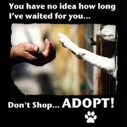 Nekupujte - adoptujte!!!