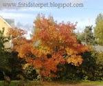 Vad har du sett för träd eller buske?