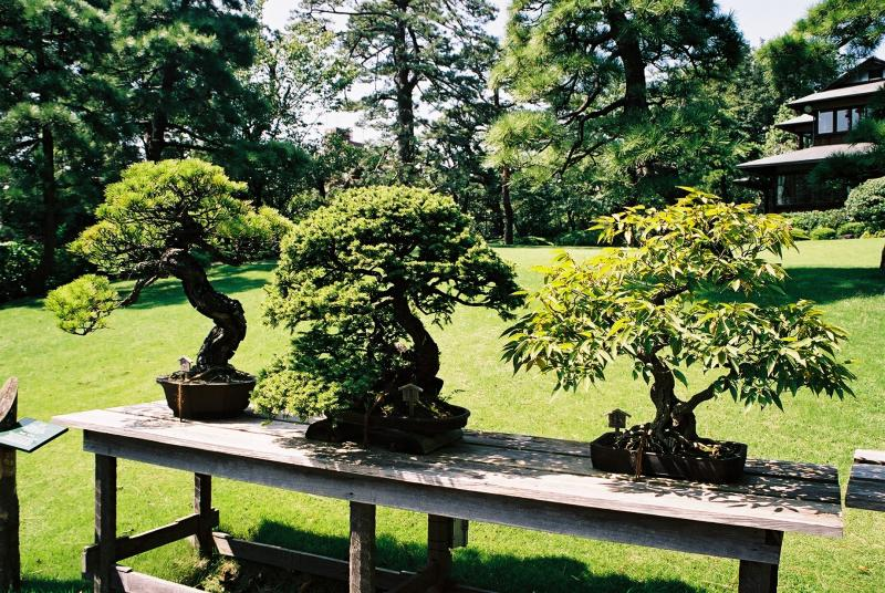 56 best images about bonsai on pinterest trees bonsai trees and. beautiful ideas. Home Design Ideas