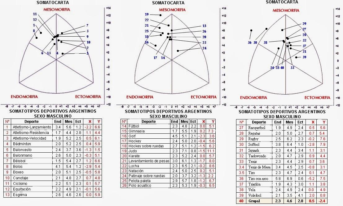 Como interpretar el somatotipo perfilantropom trico for Antropometria de la vivienda