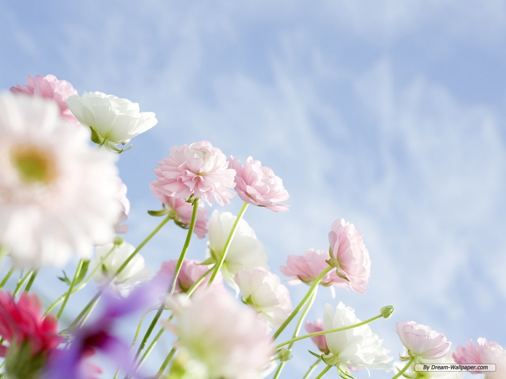 Flower wallpaper pictures free download flower wallpaper pictures voltagebd Gallery