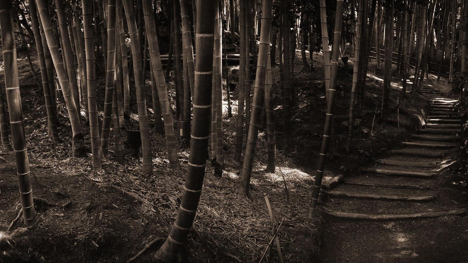 http://4.bp.blogspot.com/-EnmHPtrFl98/UOATGAyD5lI/AAAAAAAAMLo/AtVsaCFVuEk/s1600/bamboo_forest-1080.jpg