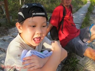Lintang Trail Mangrove Forest @ Bako NP - WireBliss