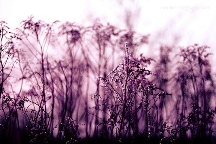 bokeh, bokeh photography, anjafotografia, violet, violet colour