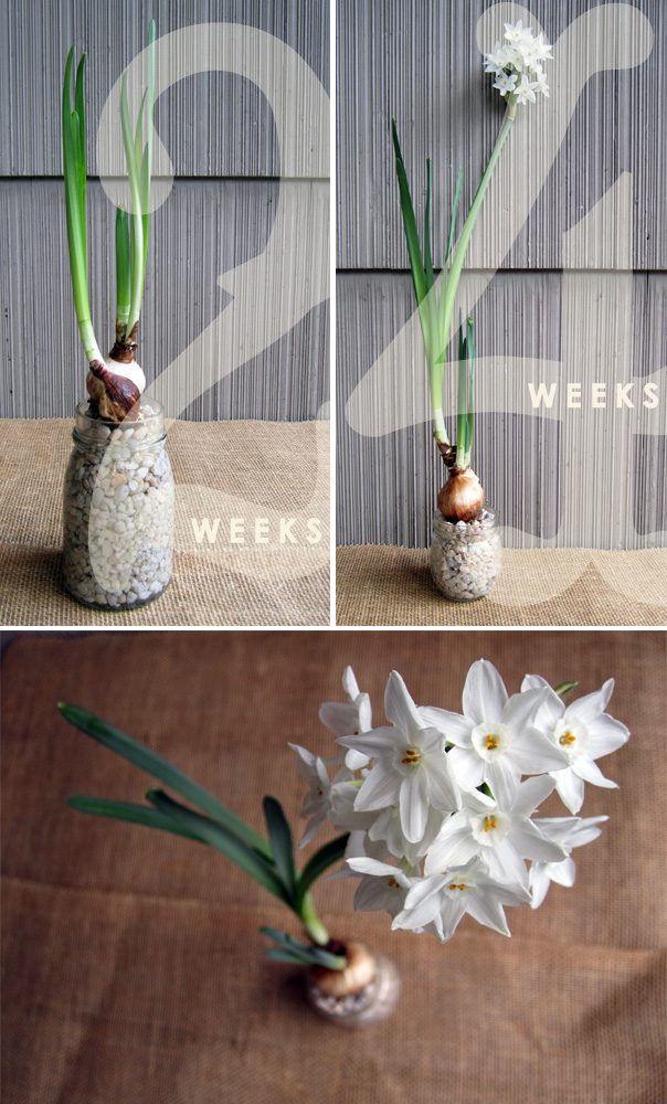 Bulb Forcing Progress