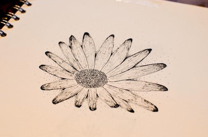 Daisy Flower Line Drawing : Josie maskell design eden project flower studies