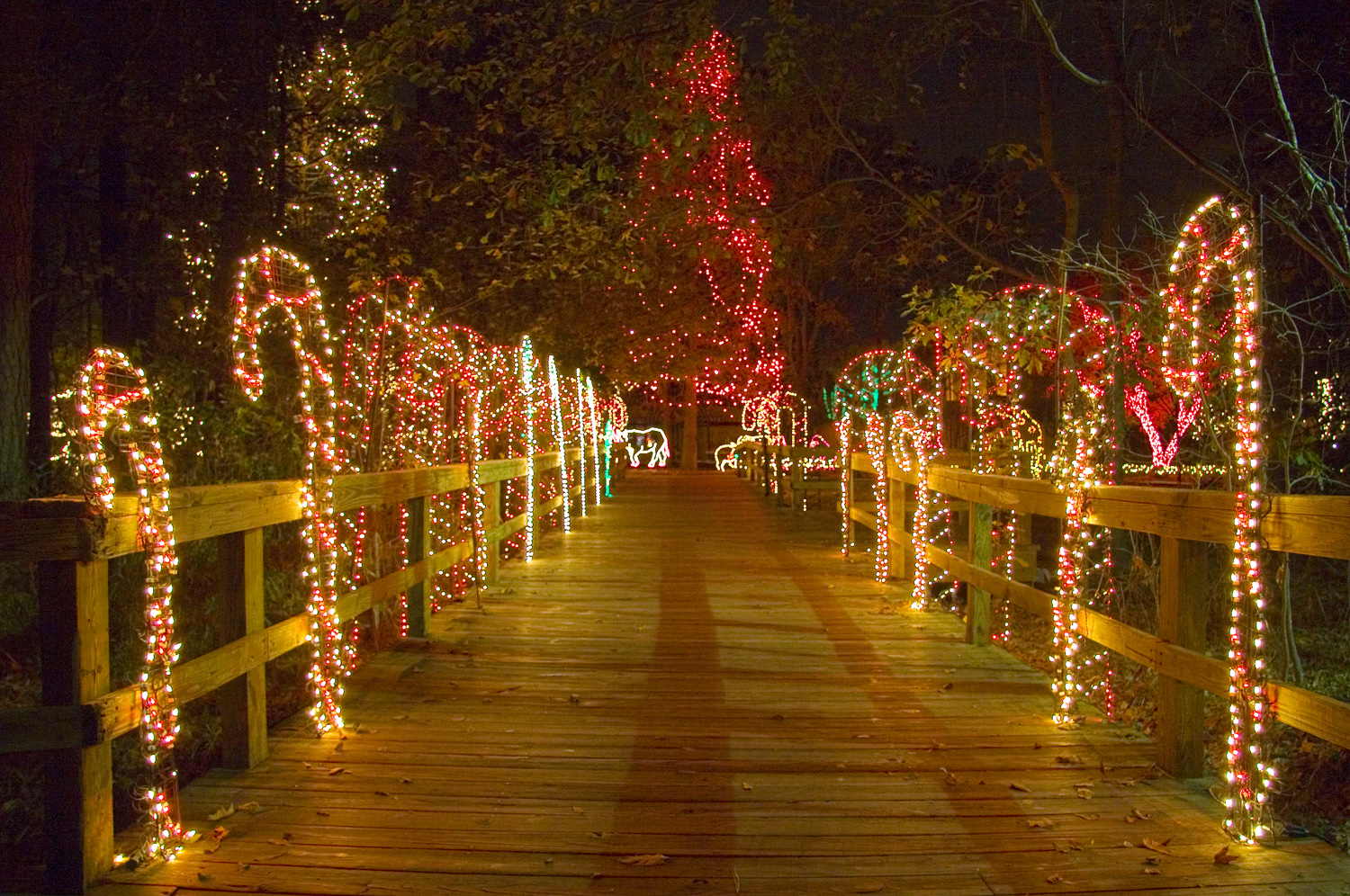 Lights Before Christmas At Riverbanks Zoo | X-Mas