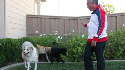 aggressive-dog-behavior-towards-strangers