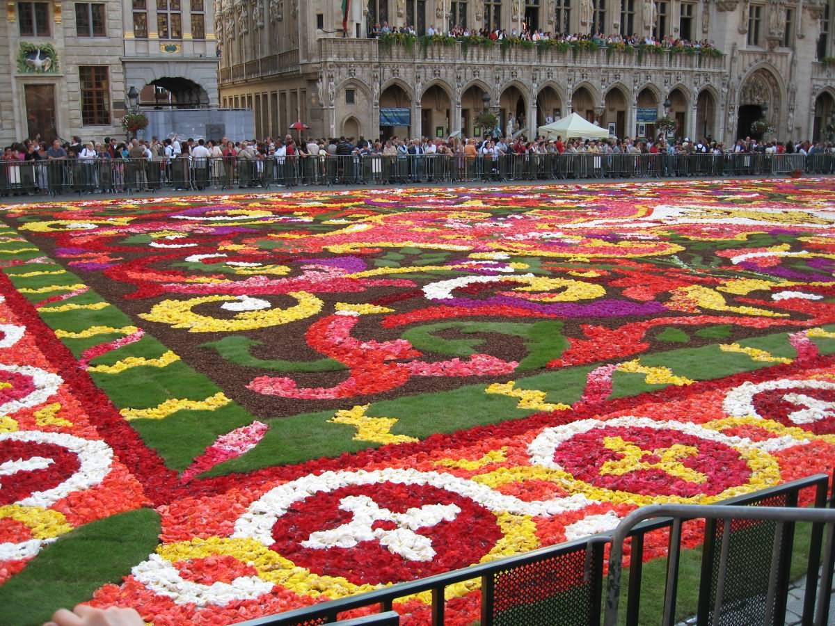 Thread: Flower carpets in Brussels