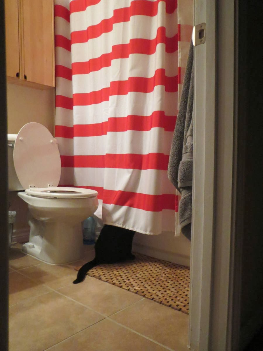 Funny cats - part 89 (40 pics + 10 gifs), pervert cat watching human takes a shower