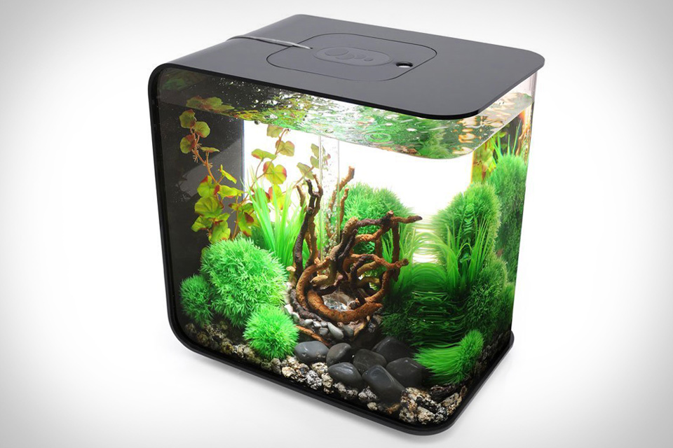 The fern and mossery desktop aquarium for office or home for Desktop fish tank