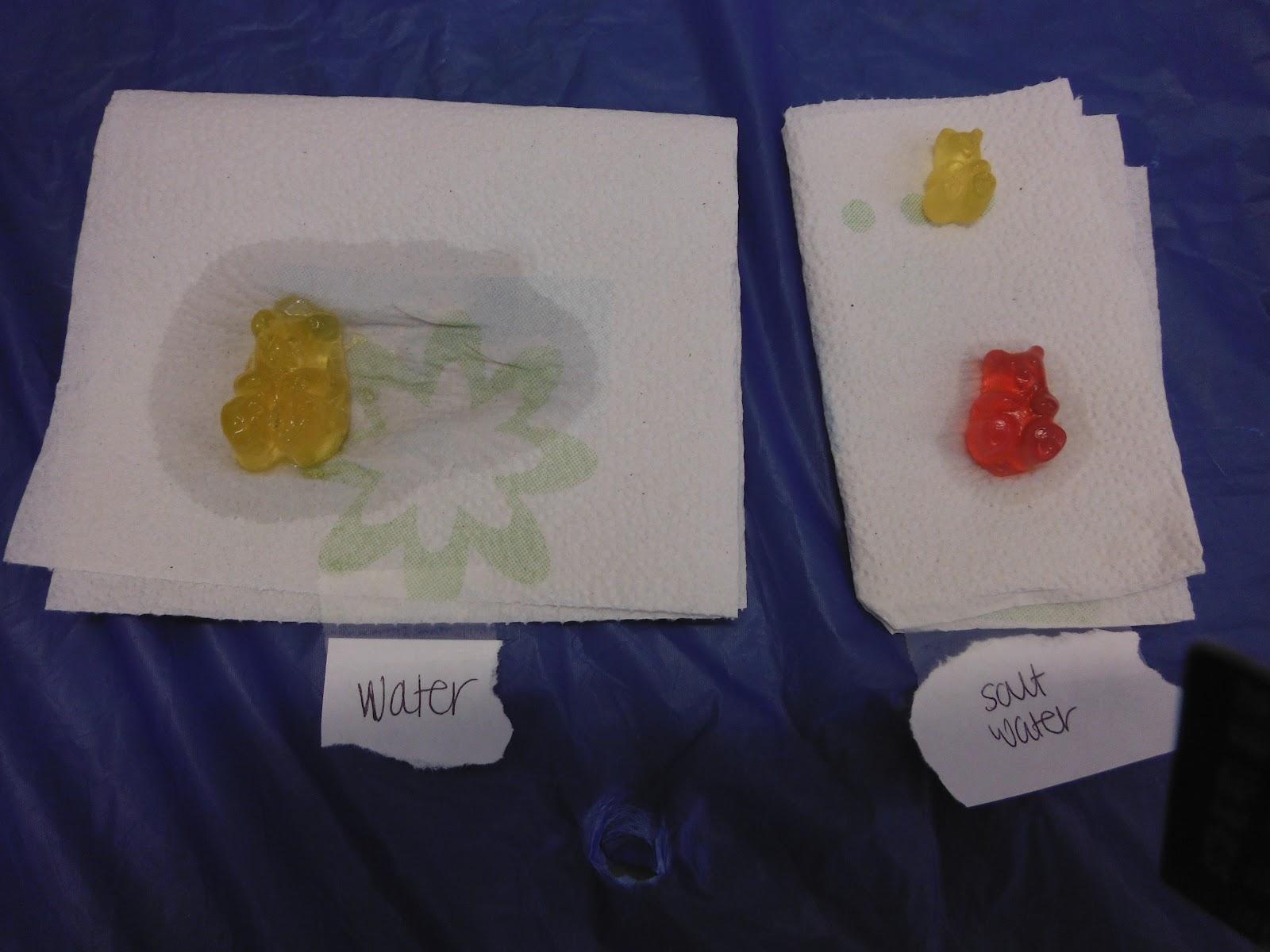 gummy bear lab essay