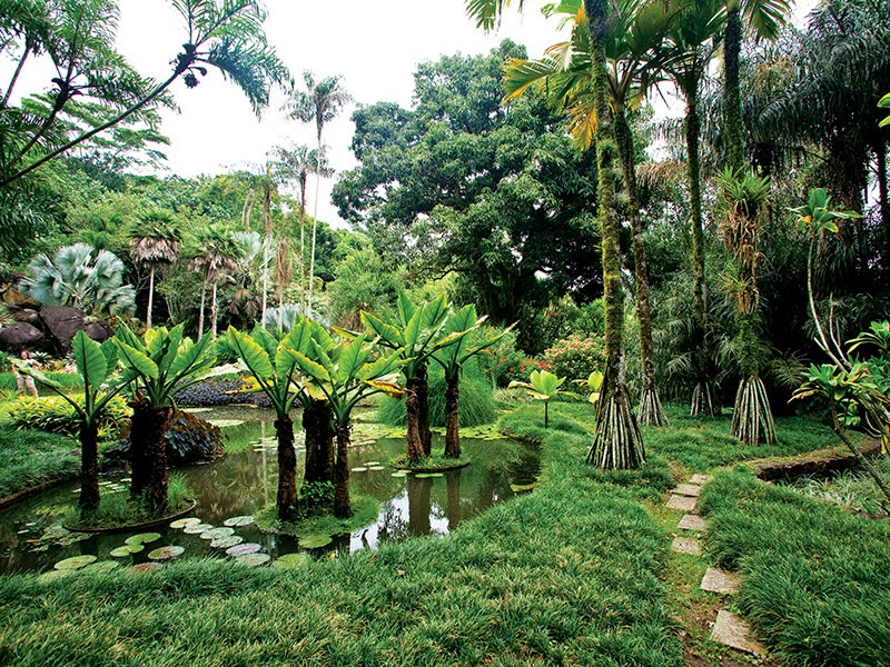 Liliane Furlan Design de Interiores: Jardim Tropical