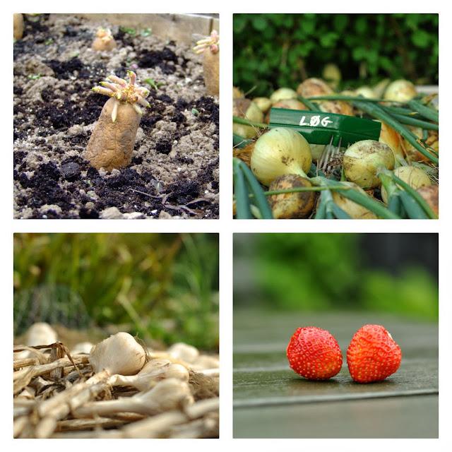 køkkenhave,kartofler,løg,hvidløg,jordbær