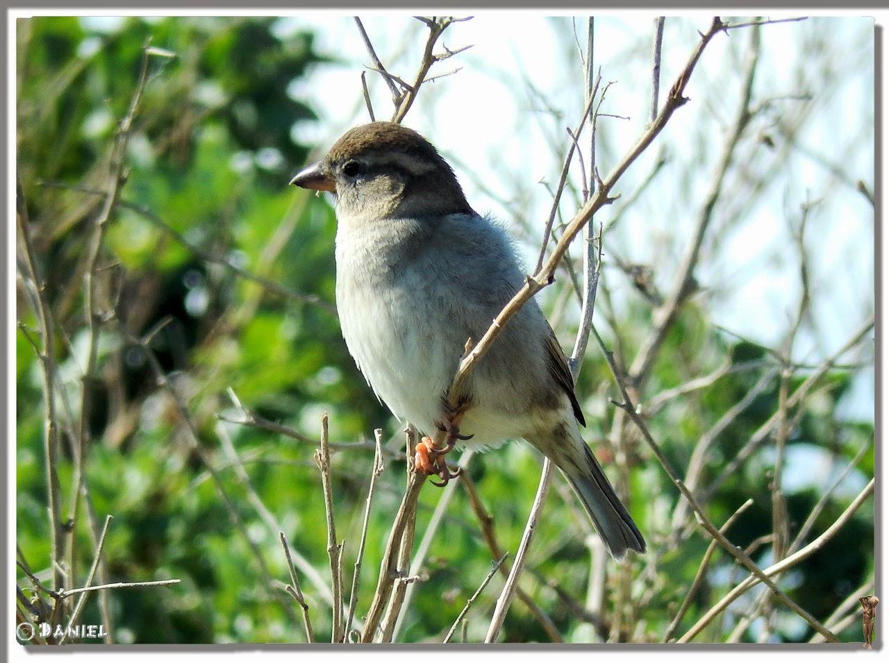 Photos daniel mai 2014 for Un petit oiseau