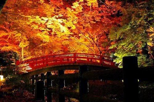 妙心寺退蔵院 秋の特別拝観