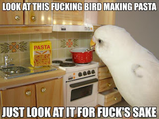 look at this bird making pasta