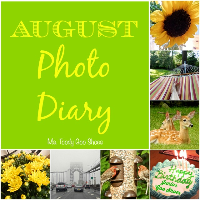 August Photo Diary  - Ms Toody Goo Shoes