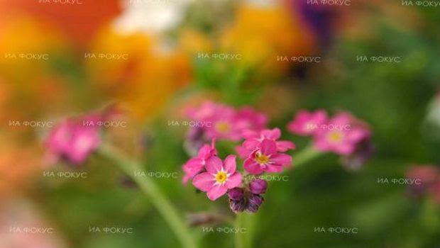 Peneliti Menemukan Cara Agar Bunga Lebih Lama Layu