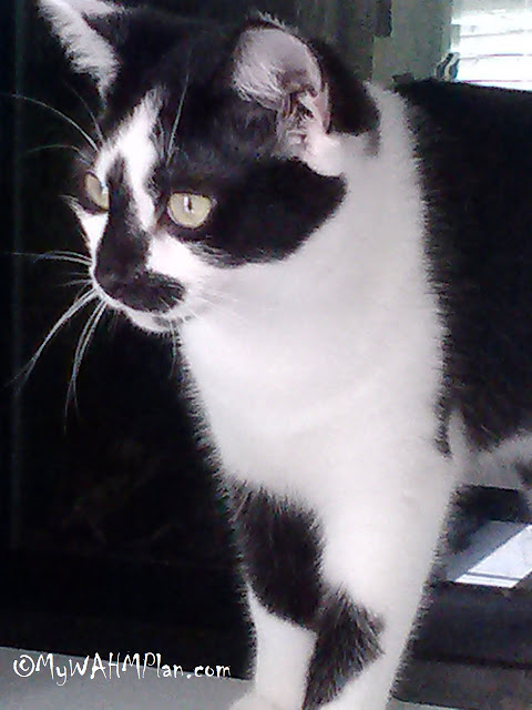 Wordless Wednesday: Fiona our kitty, green eyes, black and white cat