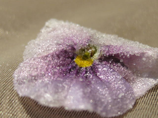 Pansies are an edible flower that works well as a candied flower