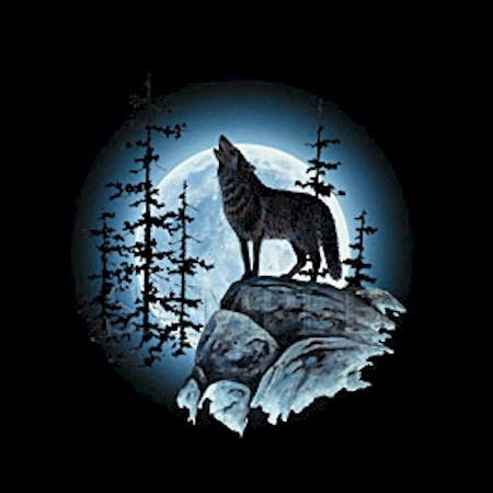 Black wolf howling at moon - photo#18