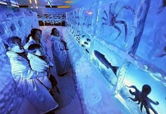 Ada Aquarium Beku di Jepang Pastinya Ikan Dalam Aquarium ini Mati
