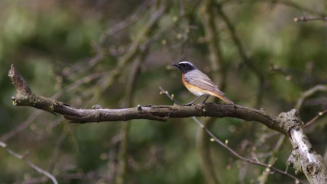 Birds, Birding, London