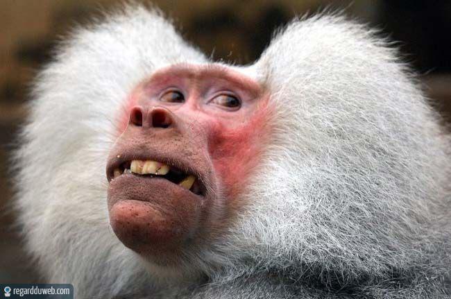 image drole de singe