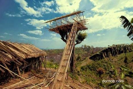 Casa del árbol en construcción con cañas