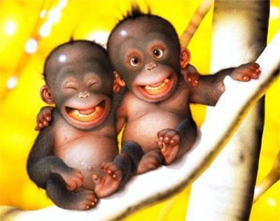 pics,wallpaper,funny monkey picture, funny monkey, funny monkey pics, funny monkey pictures