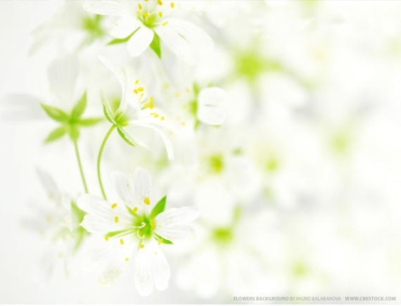 flower background. garden flowers background