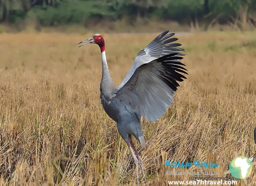 باتنا محمية الطيور الرائعة في الهند