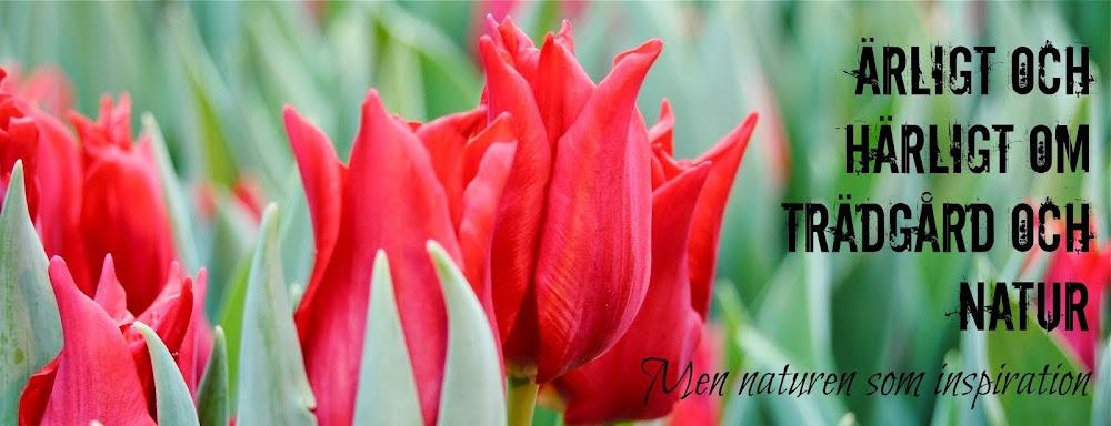 - Ärligt och härligt om trädgård och natur -
