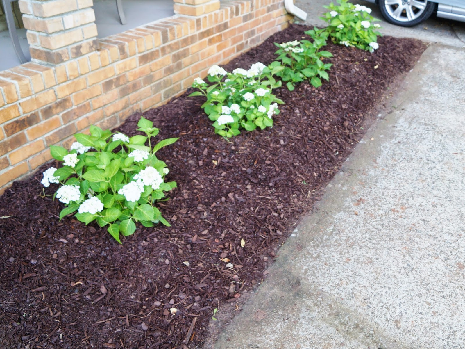 Don 39 t disturb this groove cleaning out the flower bed for Best plants for front flower bed