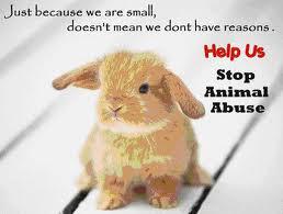 STOP ANIMAL ABUSE!