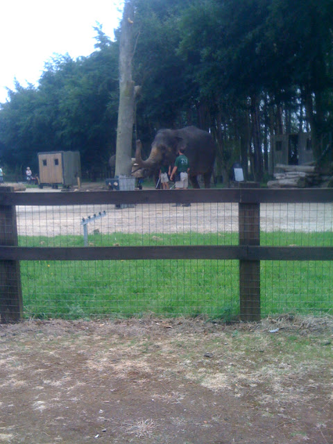 elephant show whipsnade