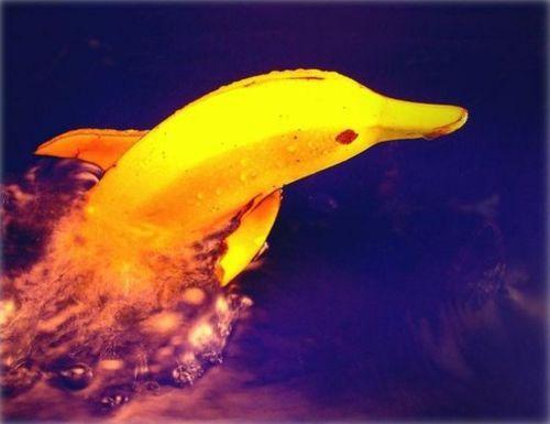 Golfinho Feito de Banana