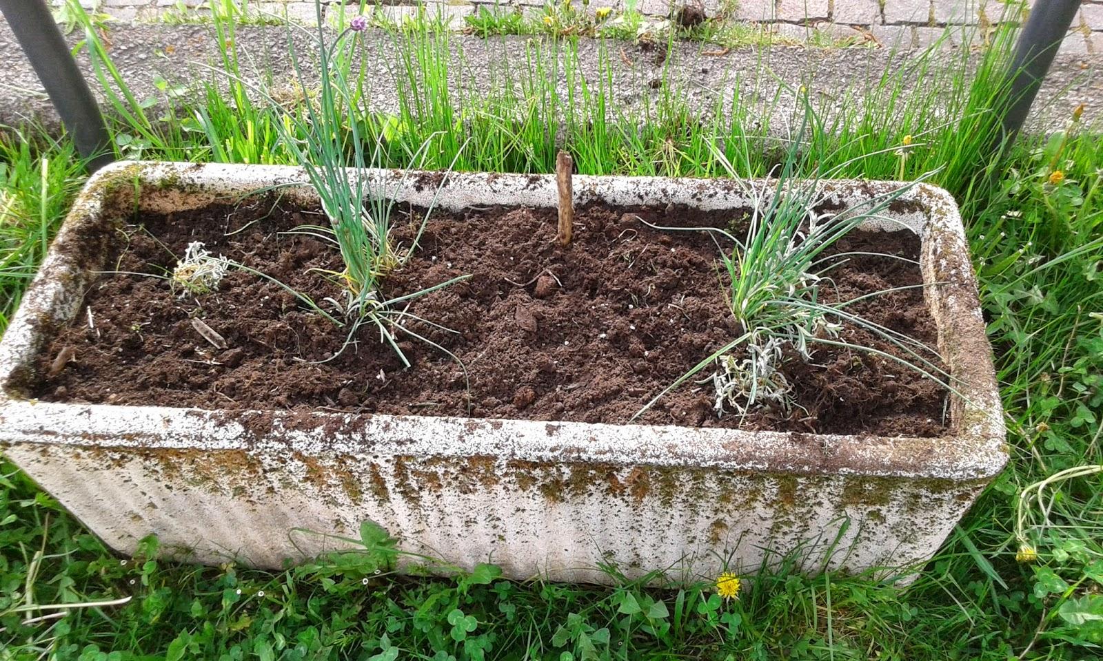 Il blog di maty l 39 orto delle fate un 39 esperienza di orto for Cartellini per piante