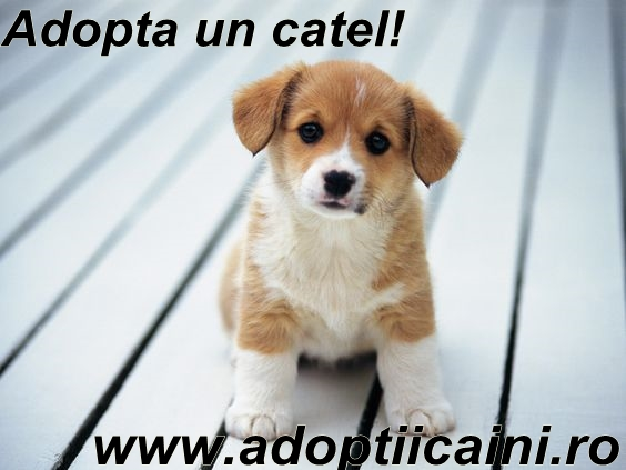 Adopta, nu cumpara!