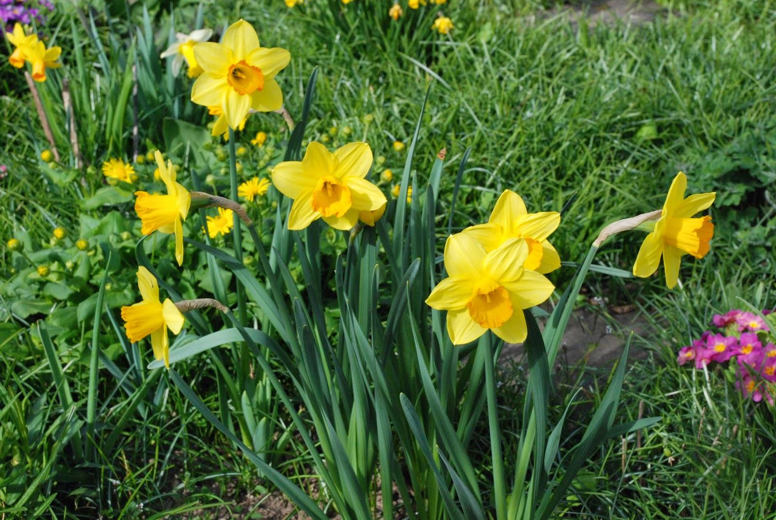 Elegant Welche Blumen Blühen Im März Foto Von Blüte: März - April Farbe: Gelb, Cremefarben,