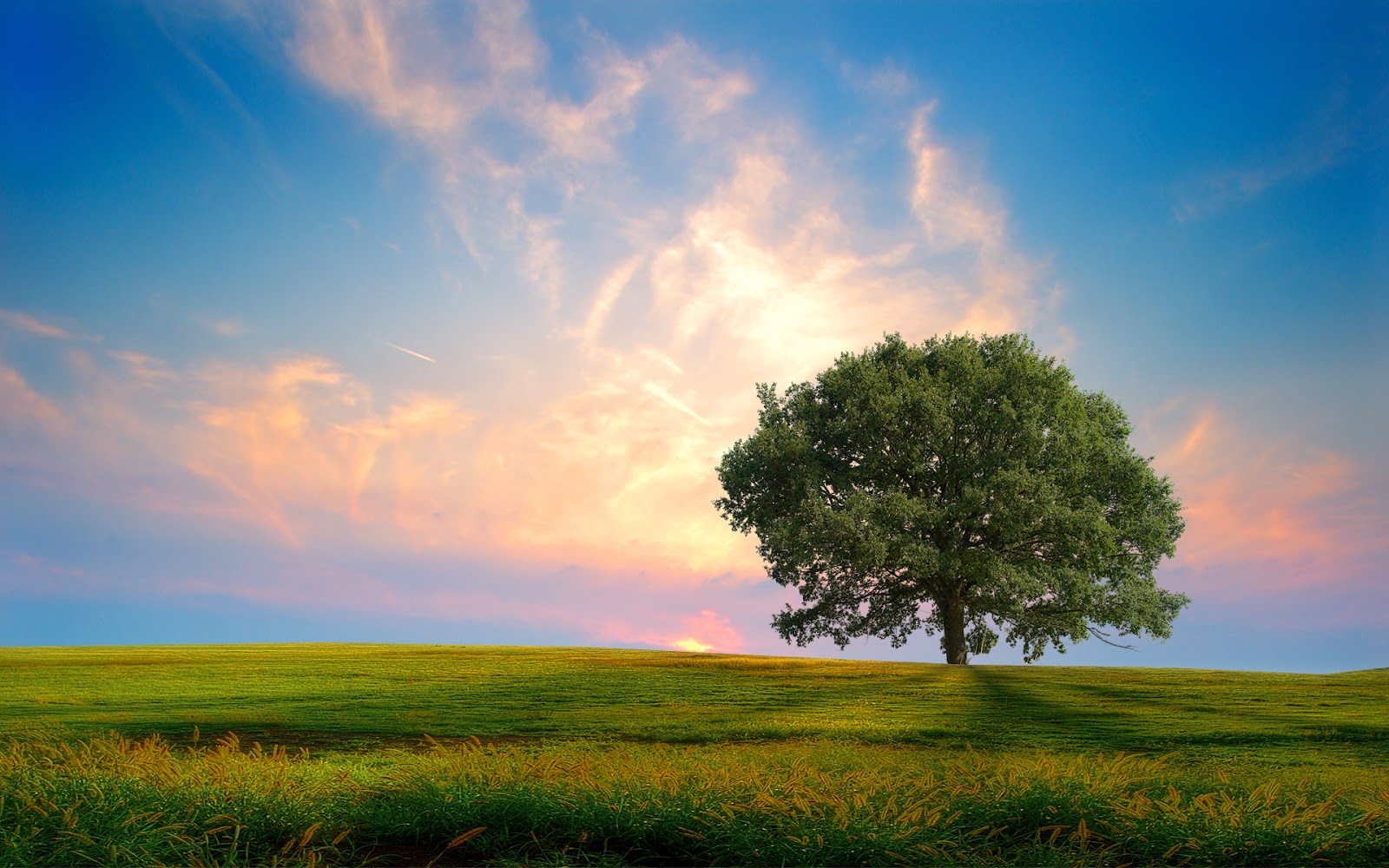 Afternoon A Beautiful Tree Wallpapers Hf Free Download Wallpaper Nature